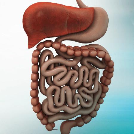 intestino site